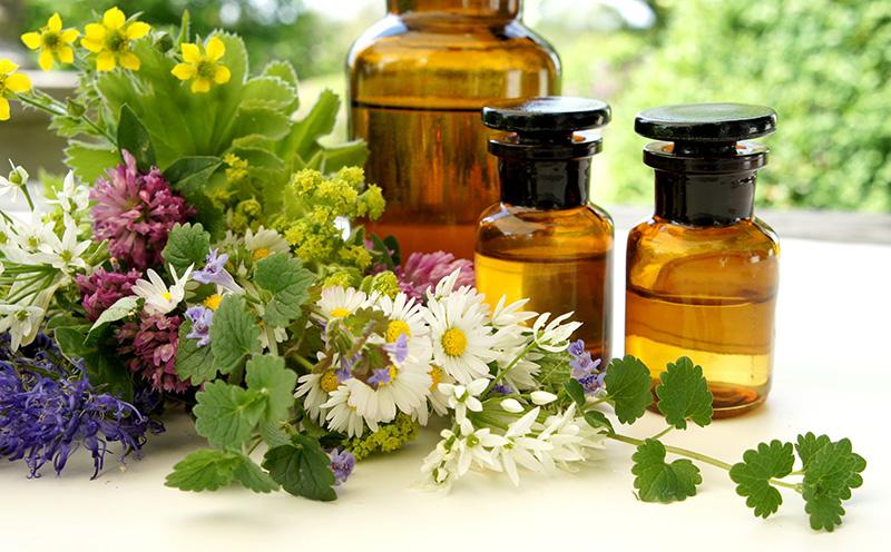 Phytotherapie Praxis für Integrative Medizin